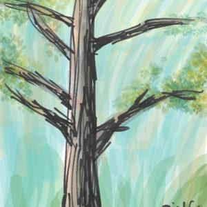 Wandering Pines